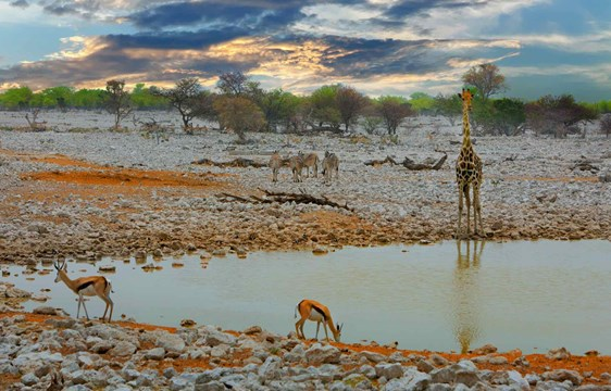 Wildlife at Okaukuejo waterhole at Etosha National Park Namibia