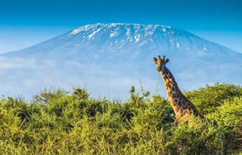 Tanzania's Parks & Reserves Listing Image