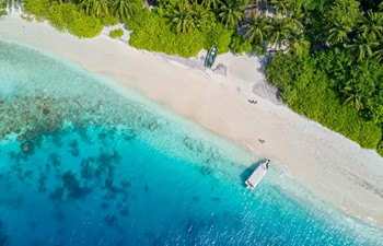 aerial view of a maldives beach lined with palm trees