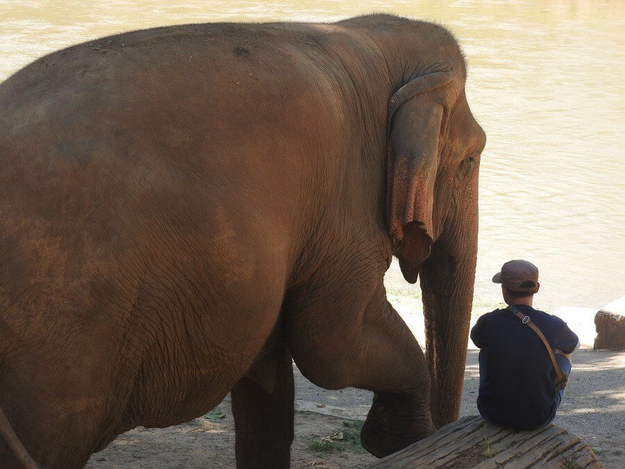 ENP volunteer sitting with an elephant