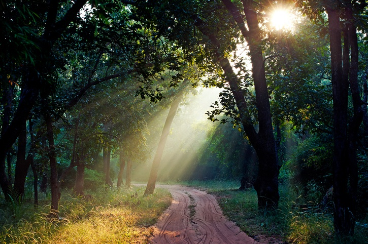 A path through Bandhavgarh Tiger Reserve