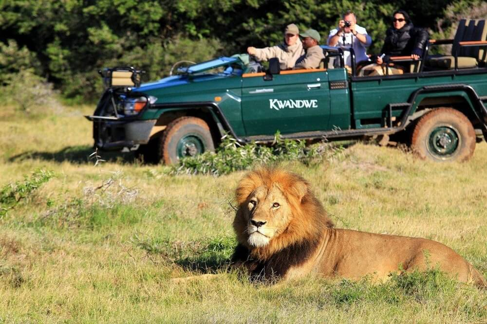 kwandwe-lodge-african-safari-lion-game-drive