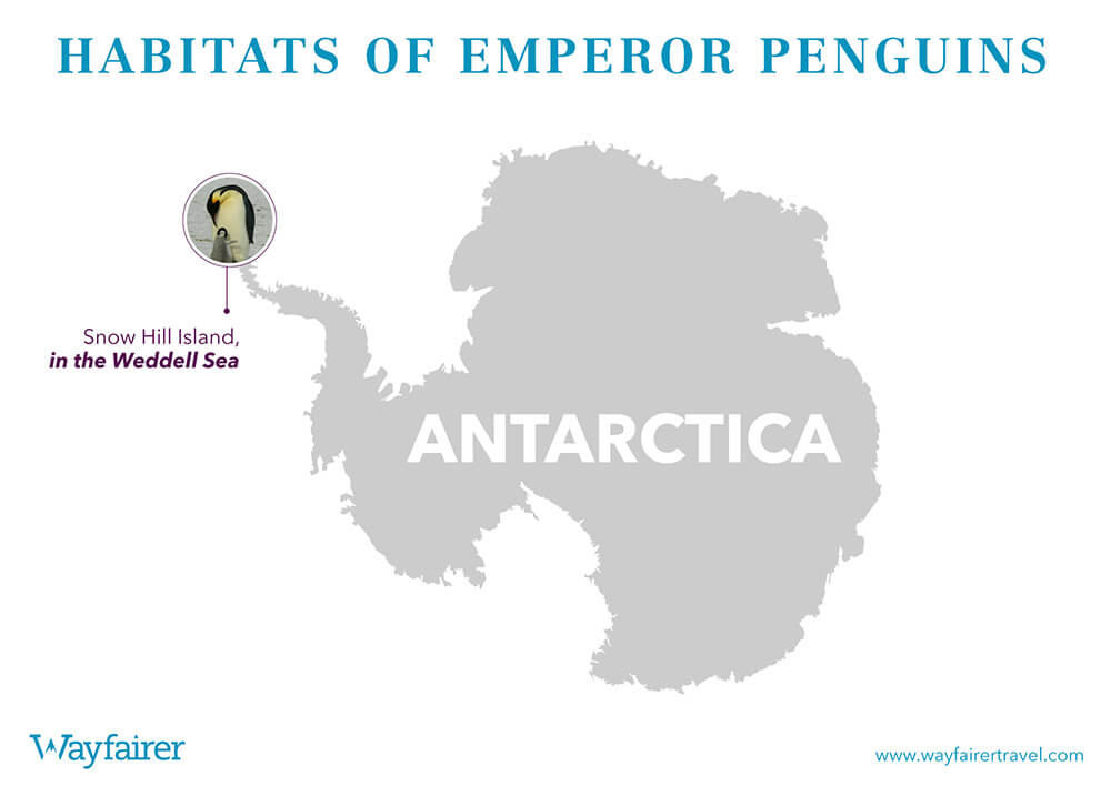 Infographic of where to see Emperor Penguins in Antartica