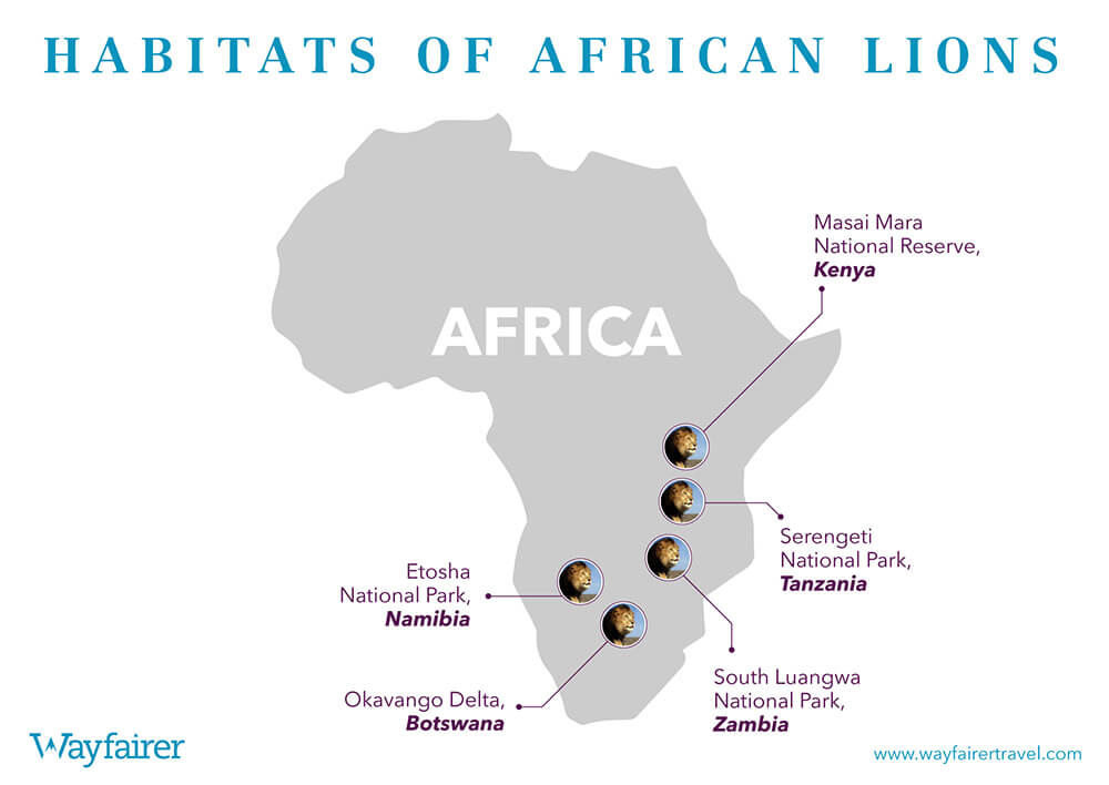Infographic of where to see African Lions in Africa
