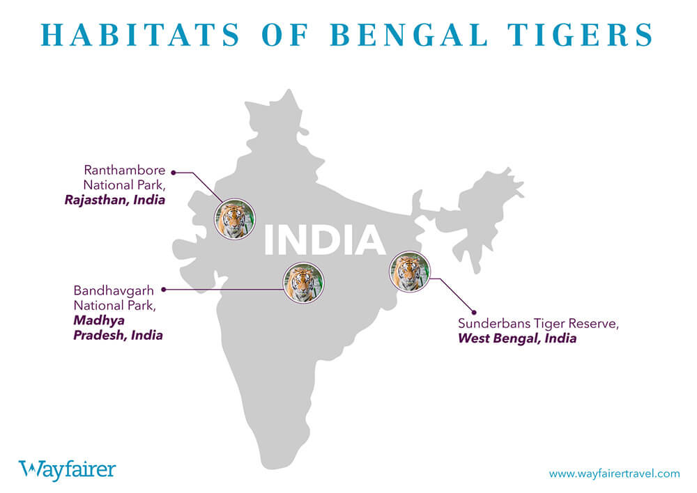 Infographic of where to see Tigers in India