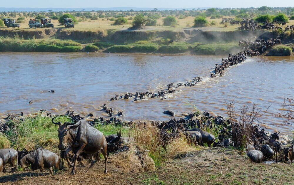 Wildebeest herd migration in Tanzania on a safari holiday