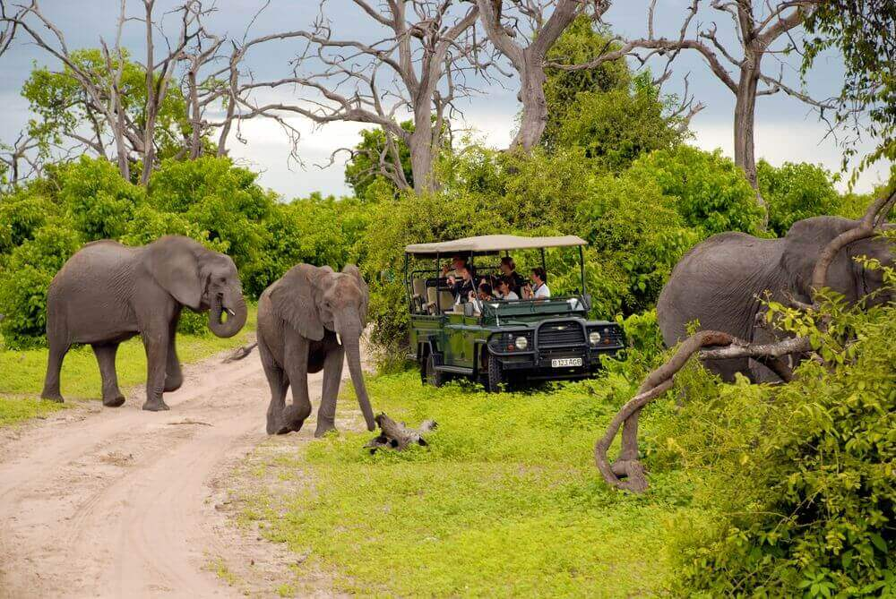 people in a safari vehicle watching a herd of elephants cross a path in botswana