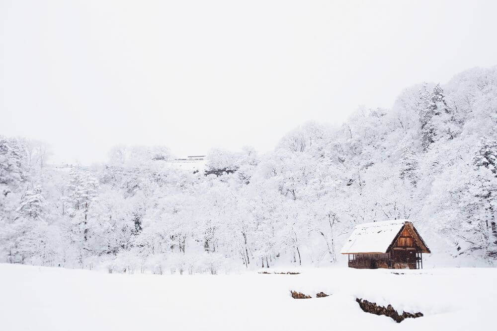 cabin in the snowy woods surrounded by trees
