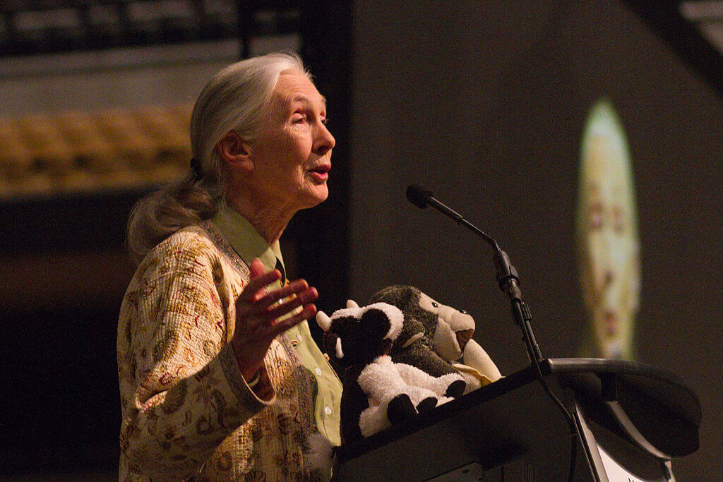 Jane Goodall lecturing about chimpanzees
