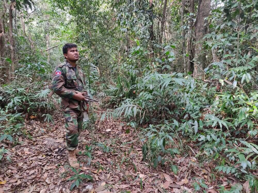 wildlife alliance ranger patrolling the jungle with a rifle