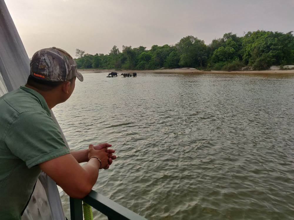 shinta mani staff looking out from the boat at a family of buffalo in the river