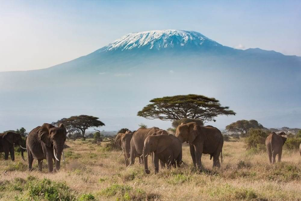 family of elephants with mount kilimanjaro in the backdrop, near arusha national park, tanzania