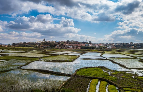 watery rice fields in the Antananarivo suburbs in Madagascar