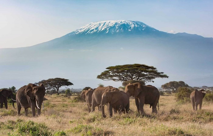 Tanzania elephants with view of Mount Kilimanjaro