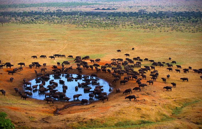 Luxury Kenya Safari Holiday Listing Image