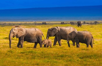 A family of elephants in Kenya