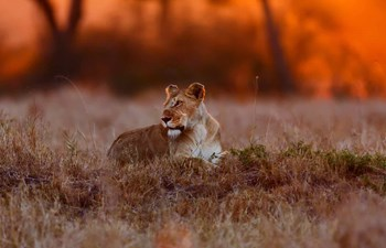 Our Top 6 Wildlife Encounters Listing Image