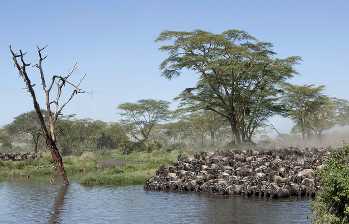 Tanzania Great Migration Safari Listing Image