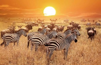 Why Visit Tarangire National Park Listing Image