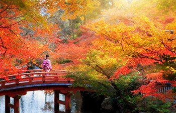 Japan Honeymoon Listing Image
