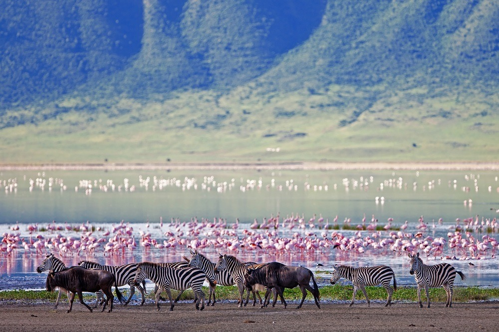 Herds in Ngorongoro Crater in Tanzania