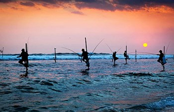 Traditional Sri Lankan fishermen on stilts