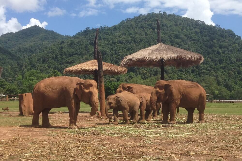 Family of elephants at ENP elephant sanctuary in Chiang Mai Thailand
