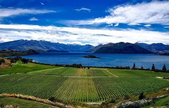 Vineyards by the lake in March in New Zealand