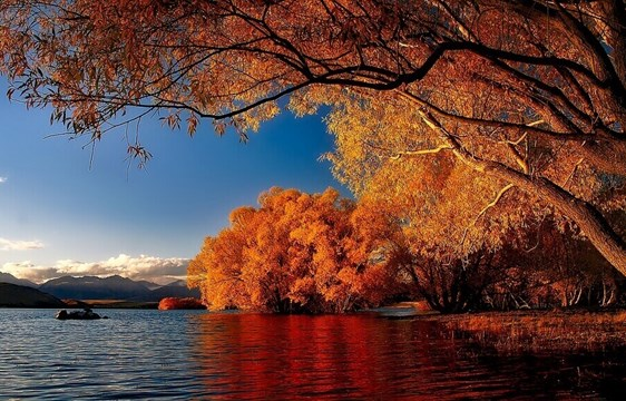Autumn foliage by the lake in May in New Zealand