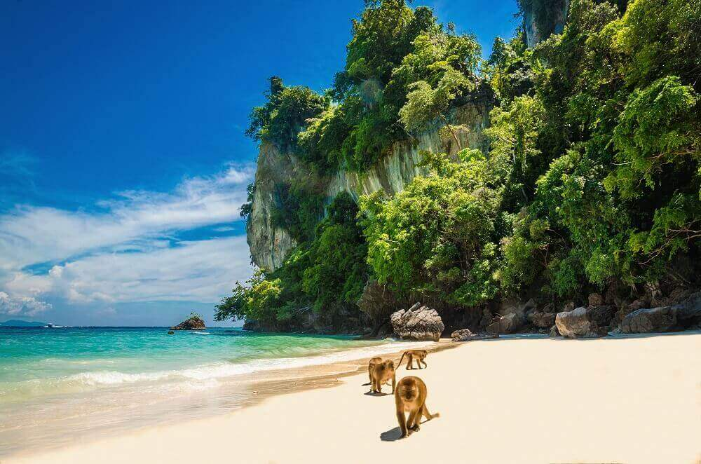 Monkeys on the beach on Koh Phi Phi in Thailand