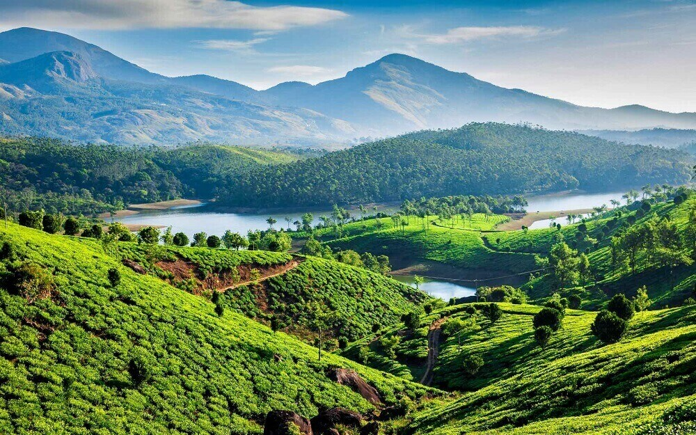 Tea plantations in Kerala India