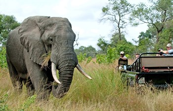african-safari-nottens-game-drive-elephant