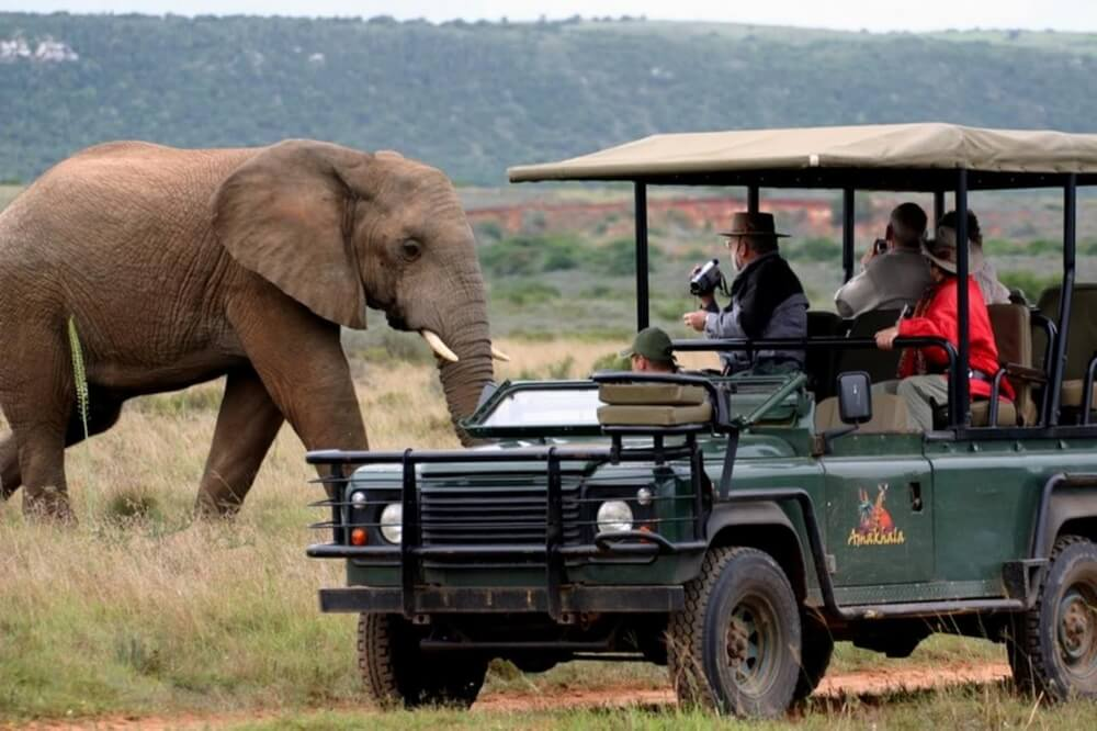 african-safari-game-drive-elephants
