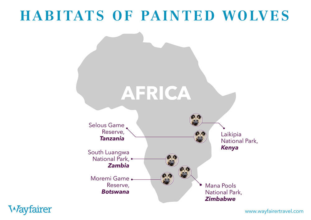 Infographic of where to see Painted Wolves in Africa