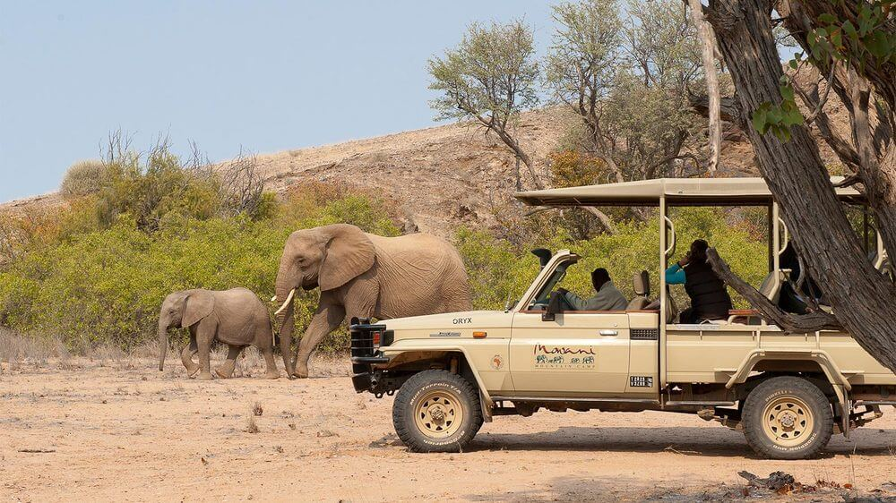 elephants african safari game drive