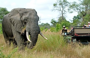 travellers in a safari vehicle watching an African elephant in Nottens Game Drive