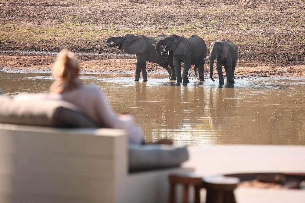 zambia lodge camp elephants wildlife watching african safari
