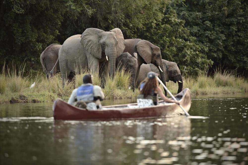 canoe safari zambia south luangwa national park elephants african safari