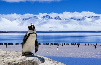 Responsible Travel Guide: Antarctica Listing Image