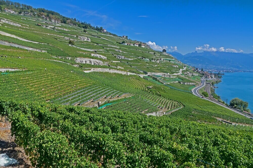 green vineyards beside blue Lake Geneva in Switzerland