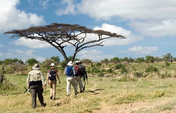Safari guide leading group in a walking safari in Tanzania