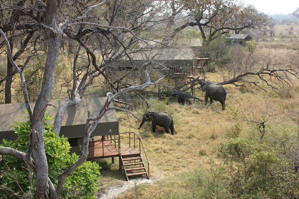 elephants wandering through nkasa lupala tented lodge in namibia