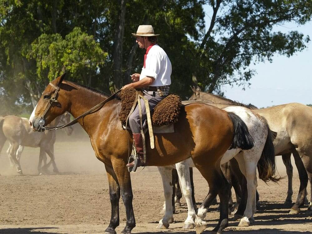 gaucho cowboy riding his horse in Argentina countryside