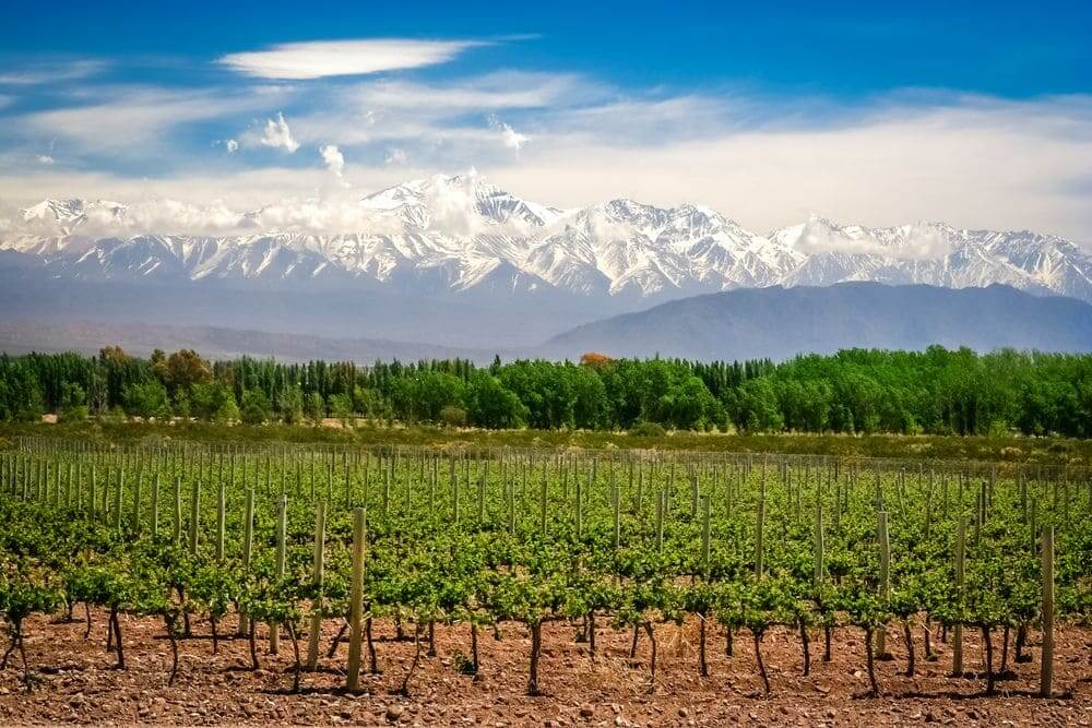 sunny mendoza wineries with Andes mountains backdrop Argentina