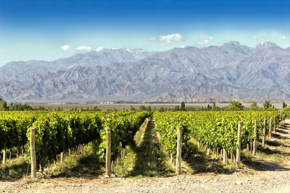 green vineyards with mountain backdrop mendoza argentina