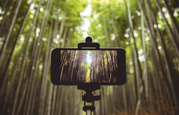 Selfie stick and smartphone in bamboo forest Japan