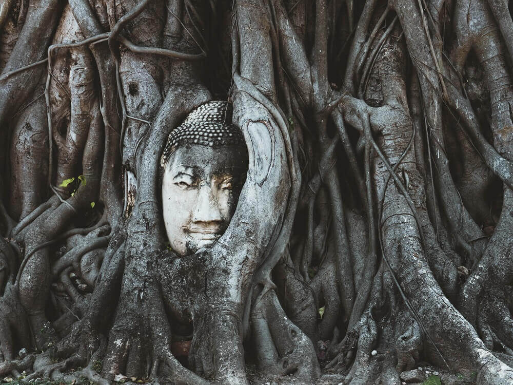 Buddha face in the tree in Ayutthaya Thailand