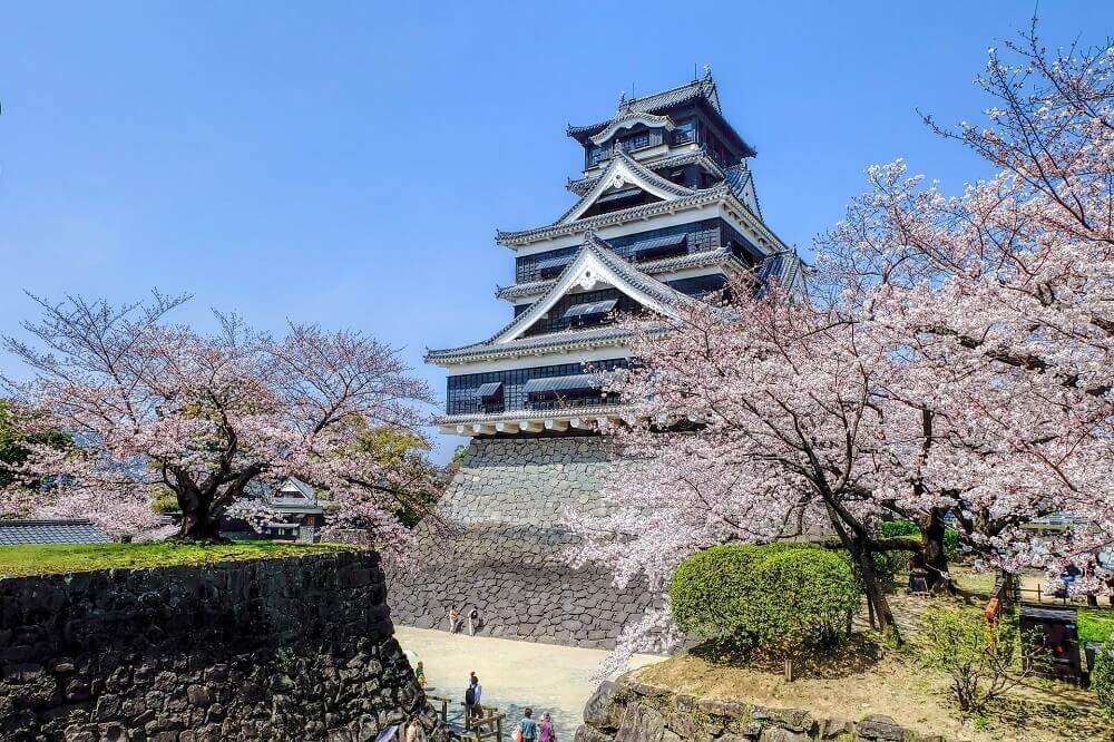 Japanese castle surrounded by blooming cherry blossom trees