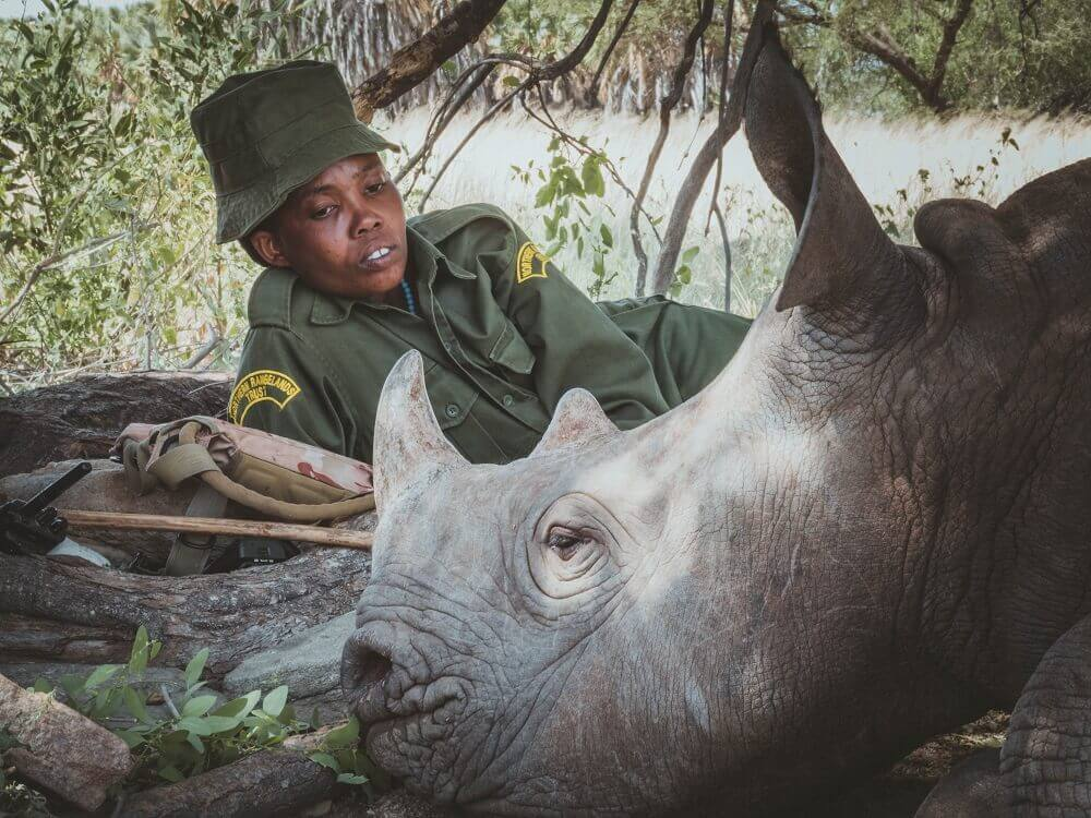 Loijupu the black rhino baby with tracker in Kenya
