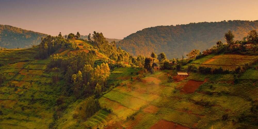 golden sunset over the mountains and forests of bwindi impenetrable national park, uganda